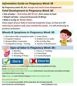 pregnancy-week-38-budding-star
