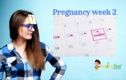 pregnancy-week-2-budding-star