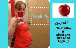 Pregnancy Week 14