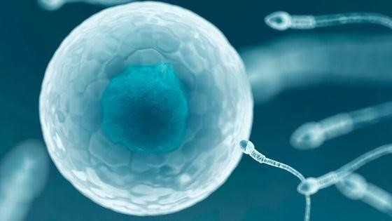 IVF Process and Benefits