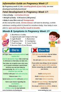 pregnancy-week-17-budding-star